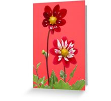 Collarettes Greeting Card