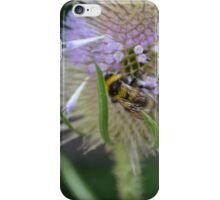 Bumble Bee sitting on a Teasel (Dipsacus) iPhone Case/Skin