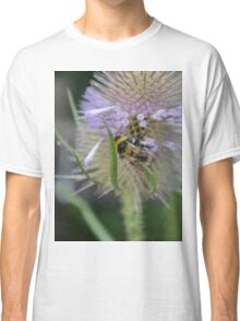 Bumble Bee sitting on a Teasel (Dipsacus) Classic T-Shirt
