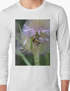Bumble Bee sitting on a Teasel (Dipsacus) Long Sleeve T-Shirt