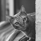 Window Cat by psychopu