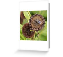 Gone to Seed Greeting Card