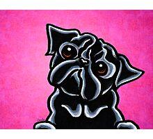 Black Pug Listen Up Magenta Photographic Print