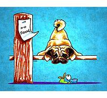Pug Fun with Fish Dock Dog Photographic Print