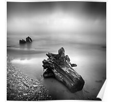 Driftwood washed up on shore Poster