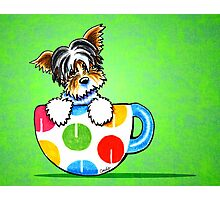 Biewer Yorkie in Polka Dot Mug Green Photographic Print
