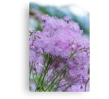 Greater Meadow-rue Canvas Print