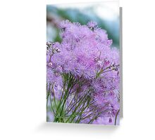 Greater Meadow-rue Greeting Card
