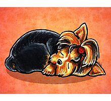 Yorkie Ladybug Bow Sleeping Red Photographic Print