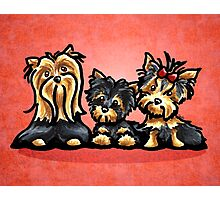 Yorkie Family Red Photographic Print