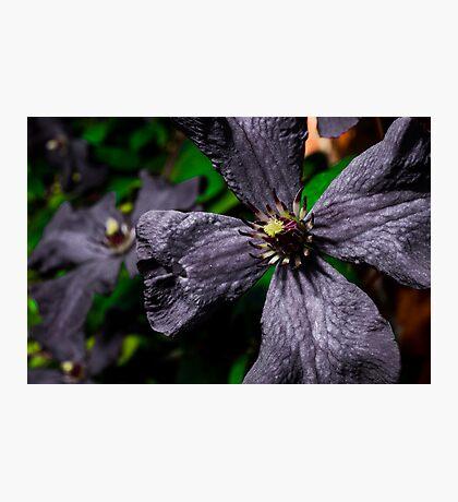 dull flower  Photographic Print