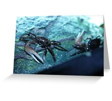 Fidler crabs Greeting Card