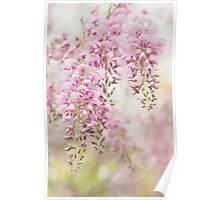 Pink Wisteria Poster