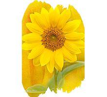 Yellow Sunshine Photographic Print
