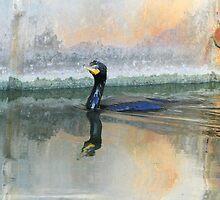 Cormorant Swim by Deborah  Benoit
