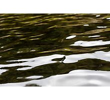 Trees Reflected In water Photographic Print