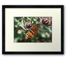 Summer Flutterby Framed Print