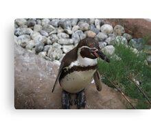 Posing Penguin Canvas Print