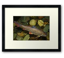 The Water Dweller Framed Print