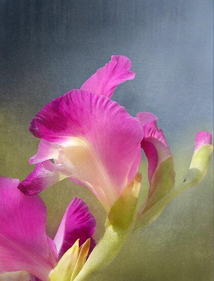 Joyously Pretty by Kathilee