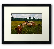 What's Up, Buttercup? Framed Print