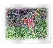 Deer Calf Poster