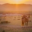 Sunset Pony by Ruben D. Mascaro