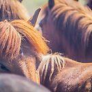 Horses by Ruben D. Mascaro