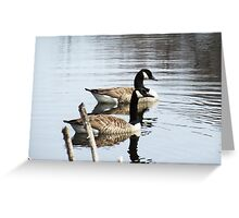 Majestic Geese in Pond Greeting Card