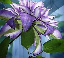 Gift of Clematis by Ellen Cotton
