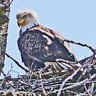 Eagle Eyed by Graeme  Hyde