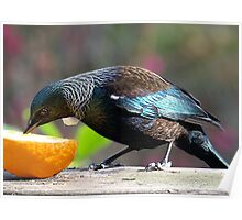 Tui - this is all mine........! Poster