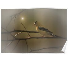 GOLDFINCH IN THE SUNLIGHT Poster