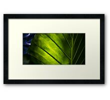 Sunlight Through A Leaf Framed Print