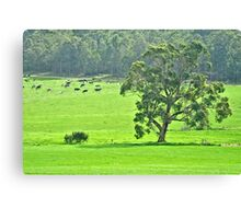 In the cow paddock Canvas Print