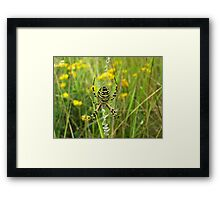 The Wasp Spider Framed Print