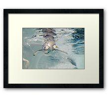 Penguin Bubbles Framed Print