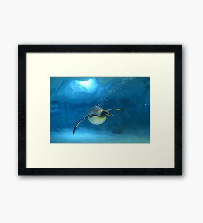 Penguin Blues Framed Print