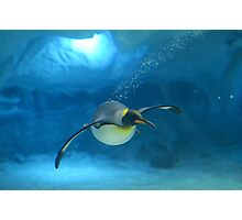 Penguin Blues Photographic Print