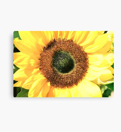 Some Flower! Canvas Print