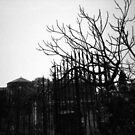 Barren - Lomo by chylng