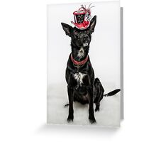 Cattle Dog Couture Greeting Card