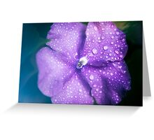 Closeup  of a flower Greeting Card