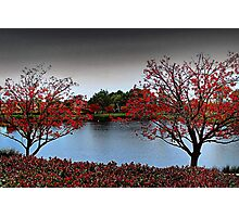 Erythrina Trees  Photographic Print