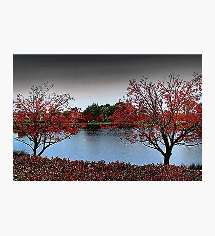 Erythrina Trees  Photographic Print