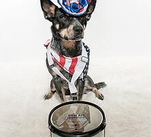 Patriotic Cattle Dog Drummer by Bobby Acree