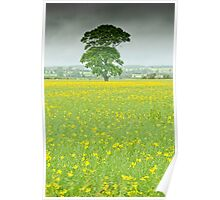 Tree and rape seed field Poster