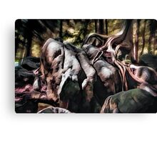 Ancient Cedar Canvas Print