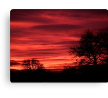 Trees in the Sunset Canvas Print