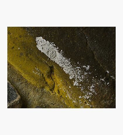 Moldy Beauty Photographic Print